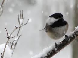 Snowbird 2